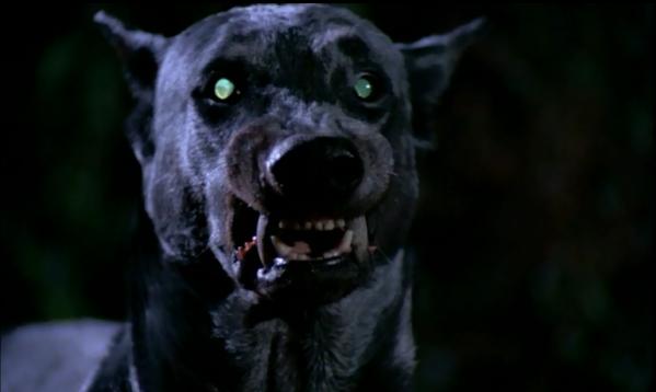 Vampirhund