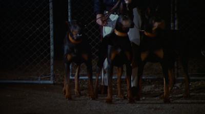 Die Dobermann Bande